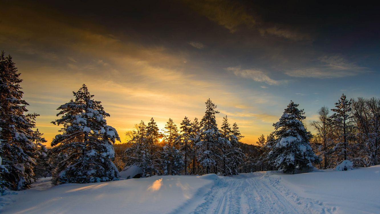 Янтарный закат зимой · бесплатное фото