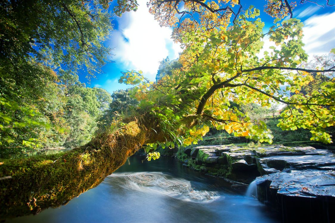 Фото бесплатно скалы, деревья, водопады - на рабочий стол