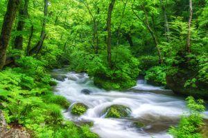 Бесплатные фото лес,деревья,камни,течение,река,природа,пейзаж