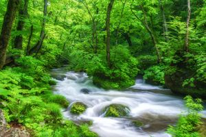 Фото бесплатно лес, деревья, камни, течение, река, природа, пейзаж