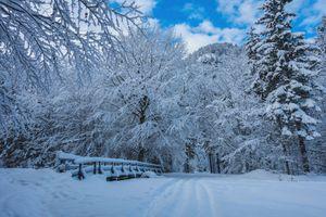 Заставки зима,снег,деревья,сугробы,лес,дорога,природа