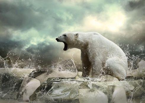 Заставки животное, медведь, голодный
