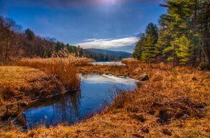 Фото бесплатно река, деревья, лес
