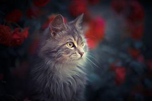 Фото бесплатно взгляд, домашнее животное, лицо