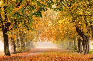 Фото бесплатно Castle Grove Park, Уэйкфилд, природа