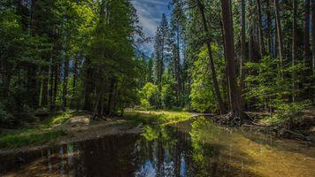 Бесплатные фото Yosemite National Park,California,Национальный парк Йосемити,Калифорния,лес,деревья,природа