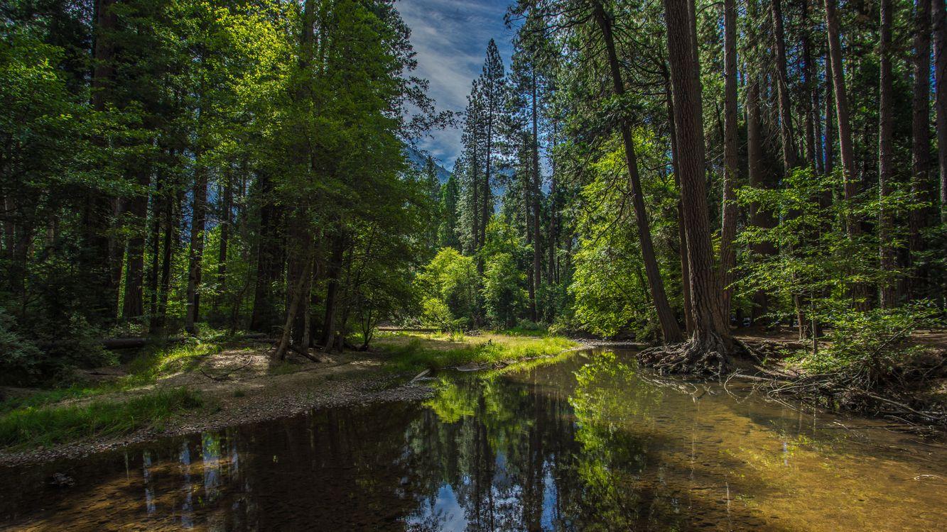 Фото бесплатно лес, Йосемитский национальный парк, природа - на рабочий стол