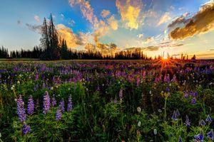 Бесплатные фото закат,поле,цветы,небо,деревья,облака,природа