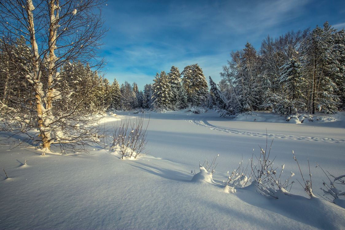 Фото бесплатно снег пейзаж следы - на рабочий стол