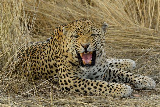 Photo free jaws, fangs, predator