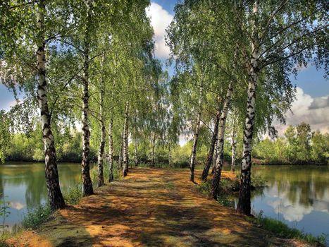 Бесплатные фото озеро,лето,водоём,пруд,аллея,парк,деревья,берёзы,лавочка,место отдыха,пейзаж