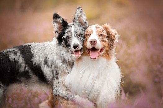 Hugs with his best friend · free photo