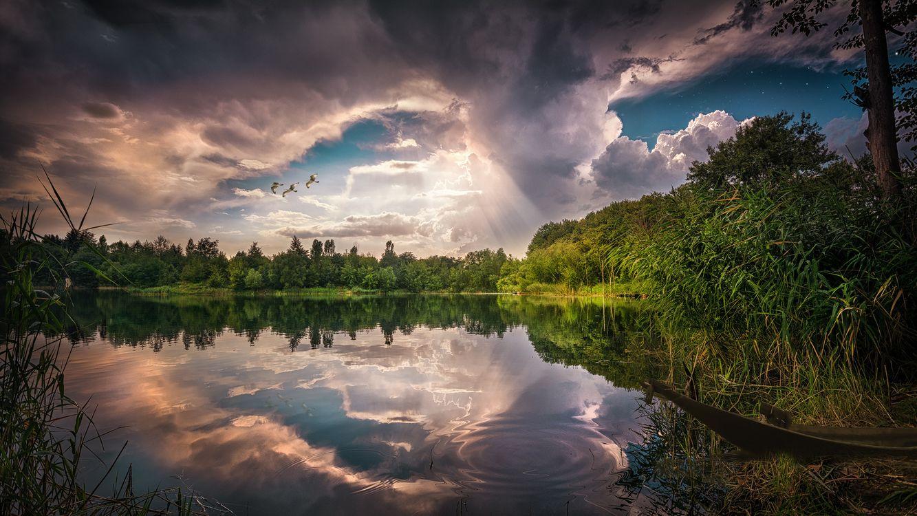 Фото бесплатно закат, озеро, отражение, небо, облака, чайки, деревья, природа, пейзаж, пейзажи