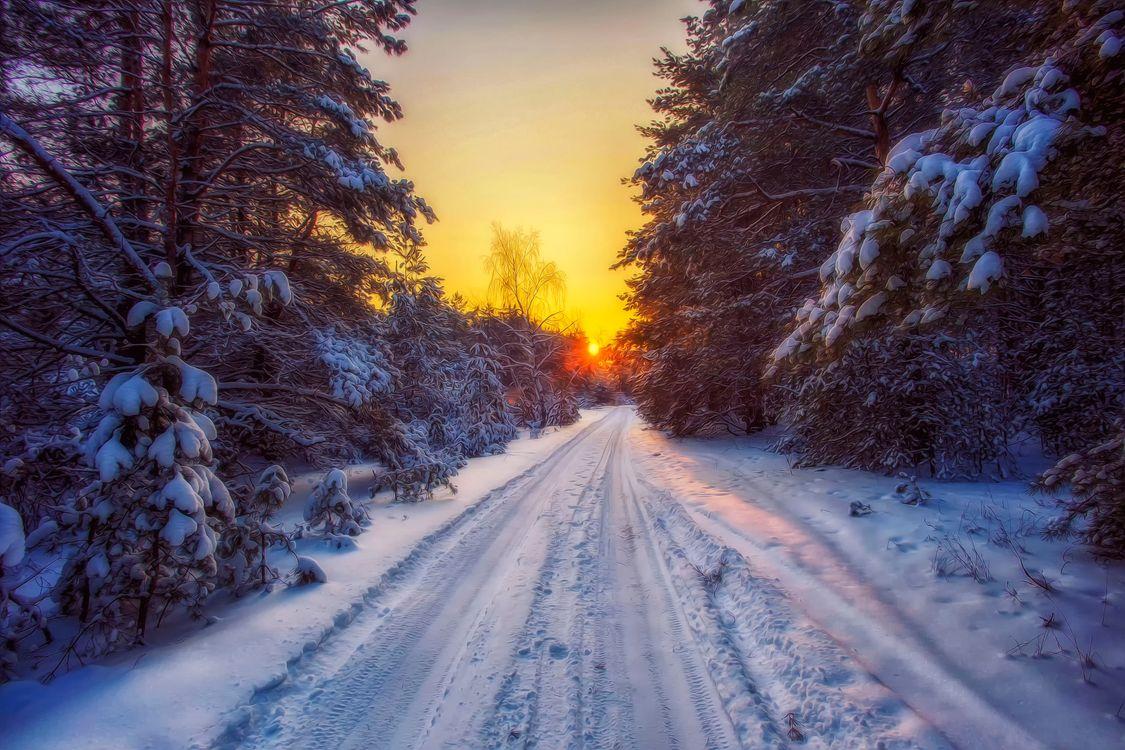 Фото бесплатно снежная дорога, лес, зима - на рабочий стол