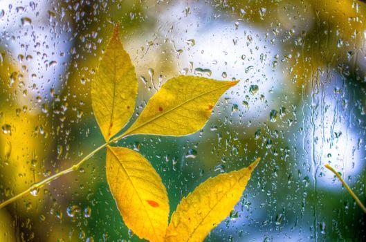 Заставки осень, боке, капли