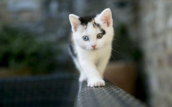 Заставки кот, животные, милый