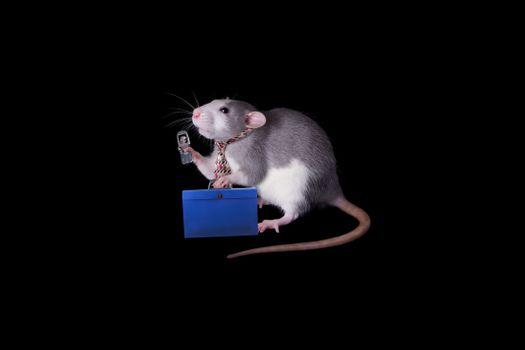 Крыса с мобильником на фоне чёрном · бесплатное фото