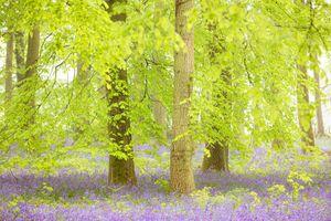 Лесные краски лета · бесплатное фото