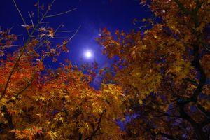Бесплатные фото осень,ночь,луна,дерево,листья,ветки,сумерки