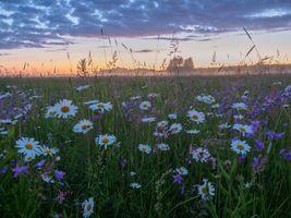 Бесплатные фото поле,утро,туман,цветы,ромашки,природа
