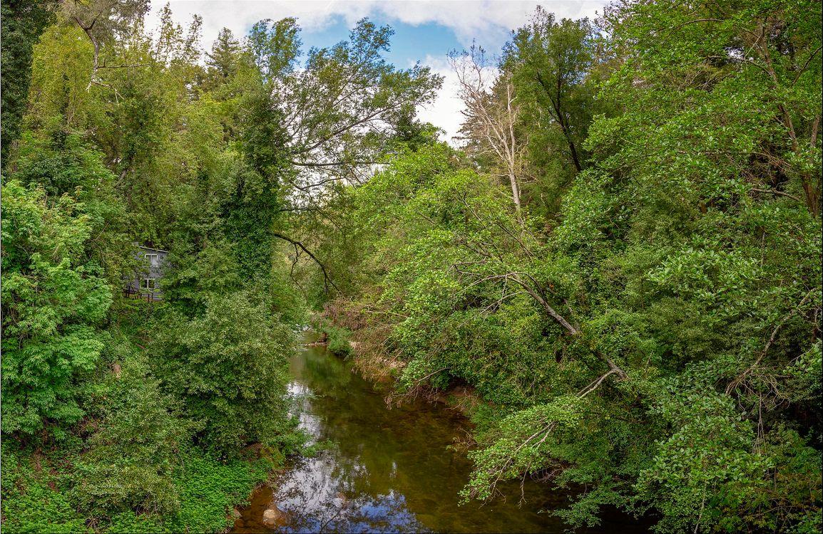 Фото бесплатно The San Lorenzo River, округ Санта-Круз, долина Сан-Лоренцо, Калифорния, река, лес, деревья - на рабочий стол