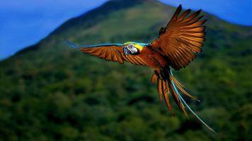 Фото бесплатно птица, попугай, полет