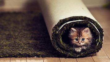 Заставки животные, ковры, кошки
