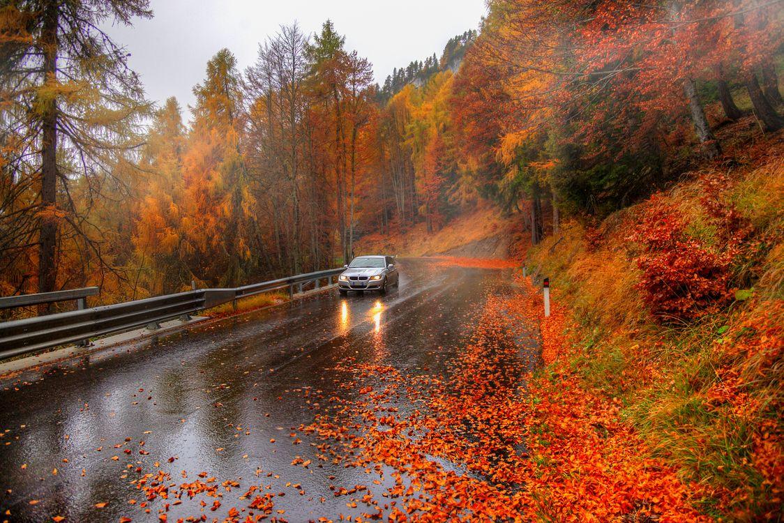 Обои осень, цвет осень, автомобиль картинки на телефон
