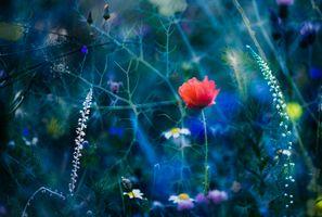 Фото бесплатно поле, красочный фон, природный фон