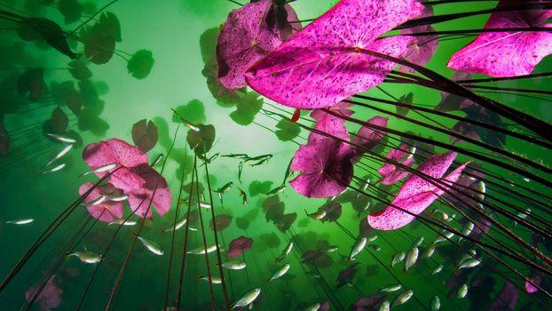 Фото бесплатно подводные растения, рыбки, глубина