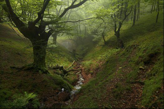 Фото бесплатно старый лес, туман, ручей