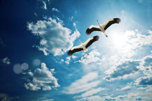 Бесплатные фото небо,облака,журавли,природа,пейзаж