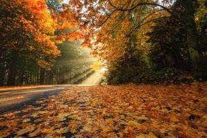 Бесплатные фото осень,парк,лес,дорога,деревья,солнечные лучи,краски осени