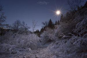 Фото бесплатно холодно, зима, деревья