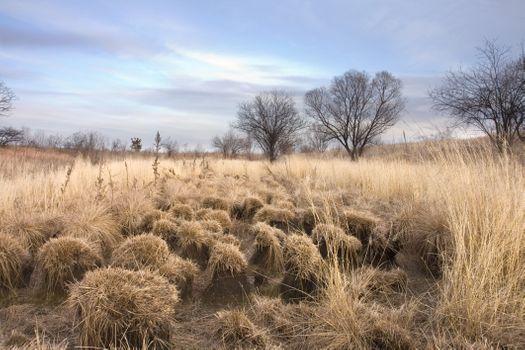 Заставки осень, луг, болото