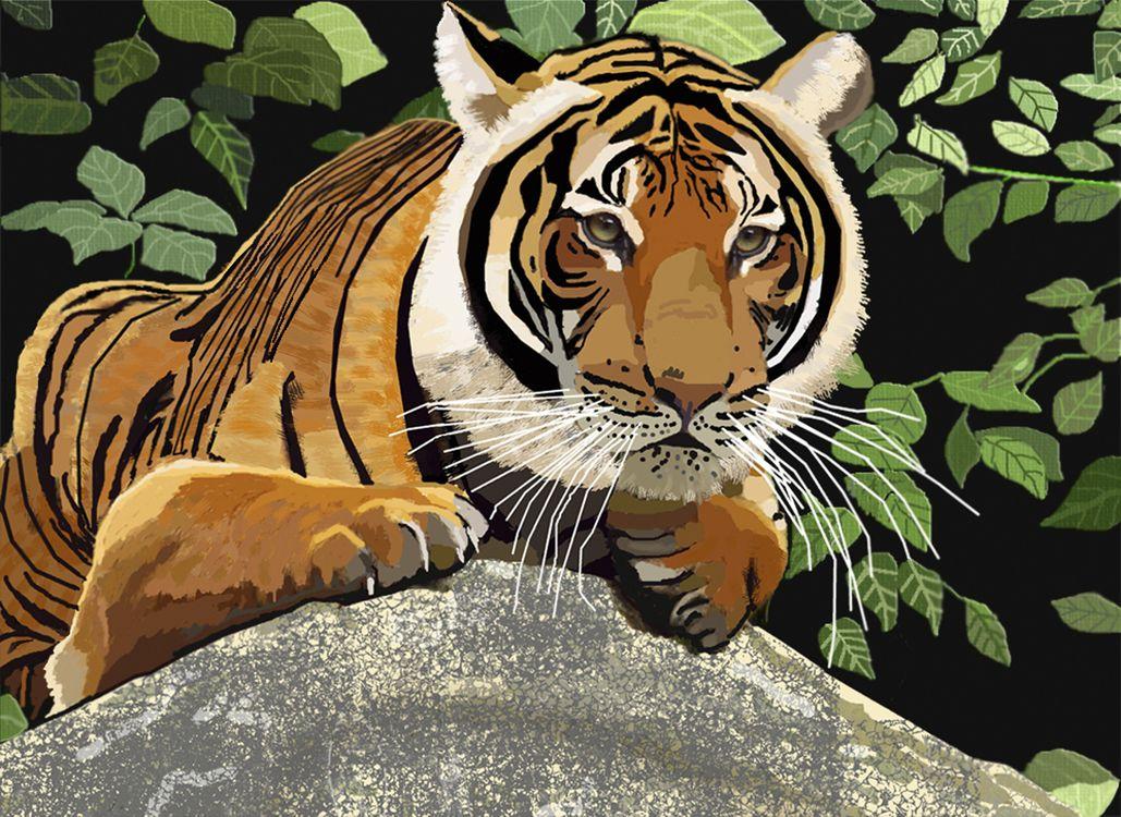 Фото бесплатно тигр, кошка, хищник, животные, опасный, природа, млекопитающее, кошачий, живая природа, дикая кошка, цифровая манипуляция, фото искусство, фотошоп, рендеринг