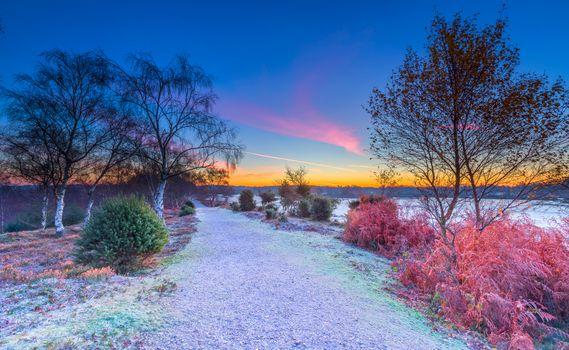 Фото бесплатно Великобритания, Национальный парк Нью-Форест, закат