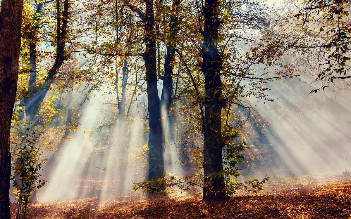 Фото бесплатно осень, лучи, свет - на рабочий стол