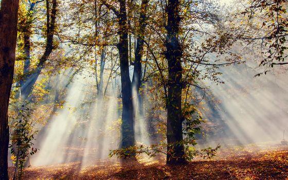 Фото бесплатно осень, лучи, свет