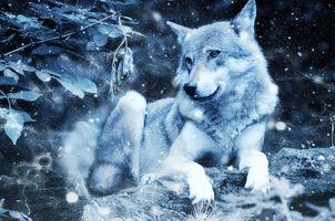 Бесплатные фото волк,хищник,зима,снег,животное,art