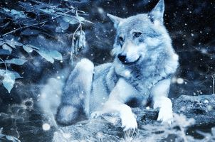 Photo free wolf, predator, winter