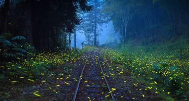 Бесплатные фото железная дорога,утро,туман,лес,деревья,пейзаж
