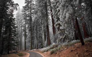 Заставки осень, холод, лес