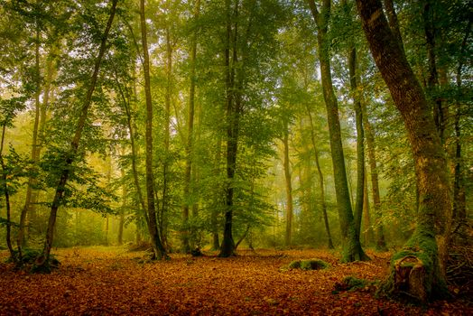 Enchanted Forest · free photo