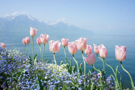 Photo free flowers, mountains, spring