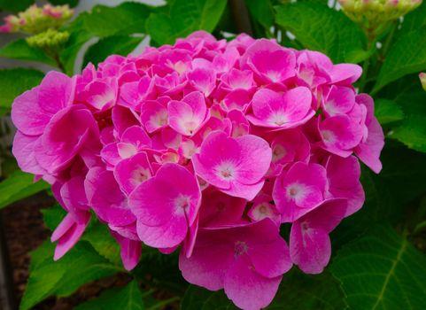 Фото бесплатно красивая, цветение, цветок