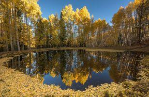 Бесплатные фото природа,вода,осень,листья,синий,желтый,отражение