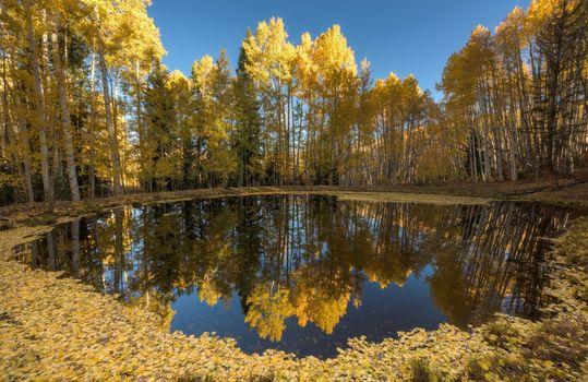 Бесплатные фото природа,вода,осень,листья,синий,желтый,отражение,пруд