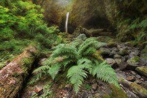 Фото бесплатно Папоротник, водопад, ручей Руккель