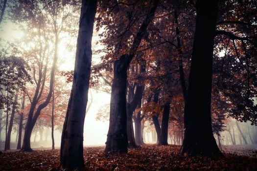 Заставки осень, смог, листопад